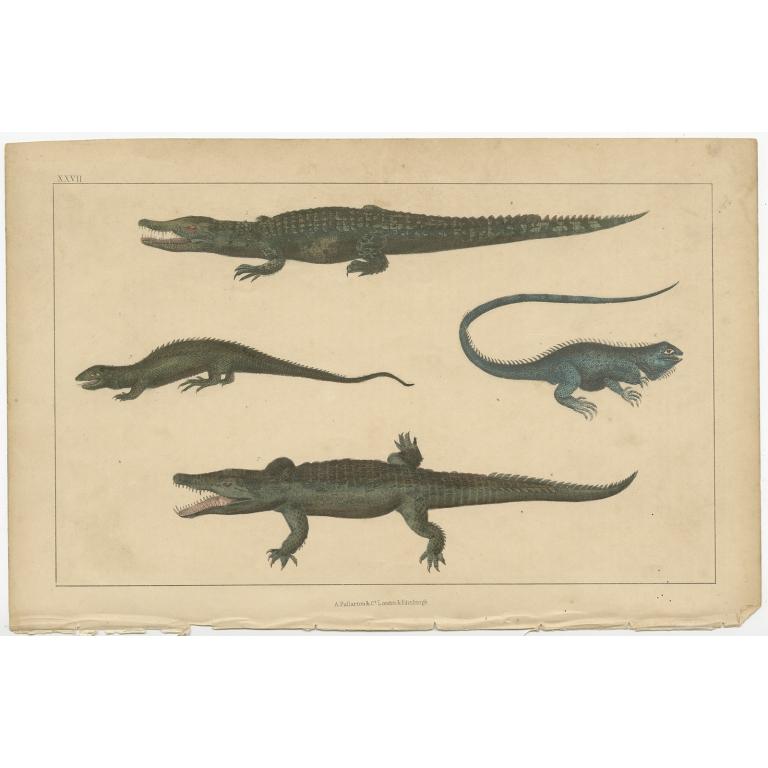 Antique Print of various Reptiles by Fullarton (c.1852)