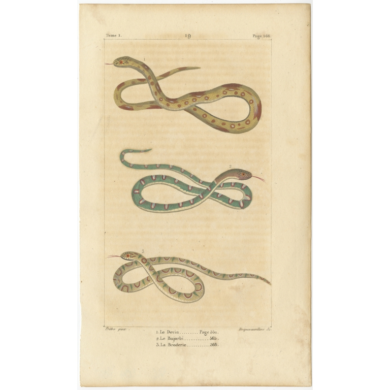 Antique Print of the Green Racer and other Snakes (c.1820)
