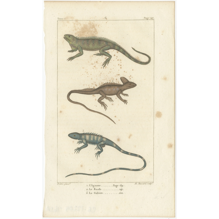 Antique Print of the Green Iguana and other Lizards (c.1820)