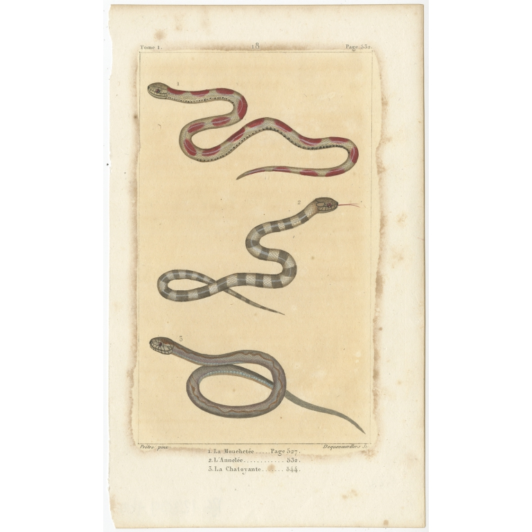 Antique Print of the Corn Snake and other Snakes (c.1820)
