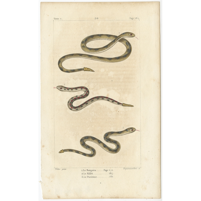 Antique Print of the Timber Rattlesnake and other Snakes (c.1820)