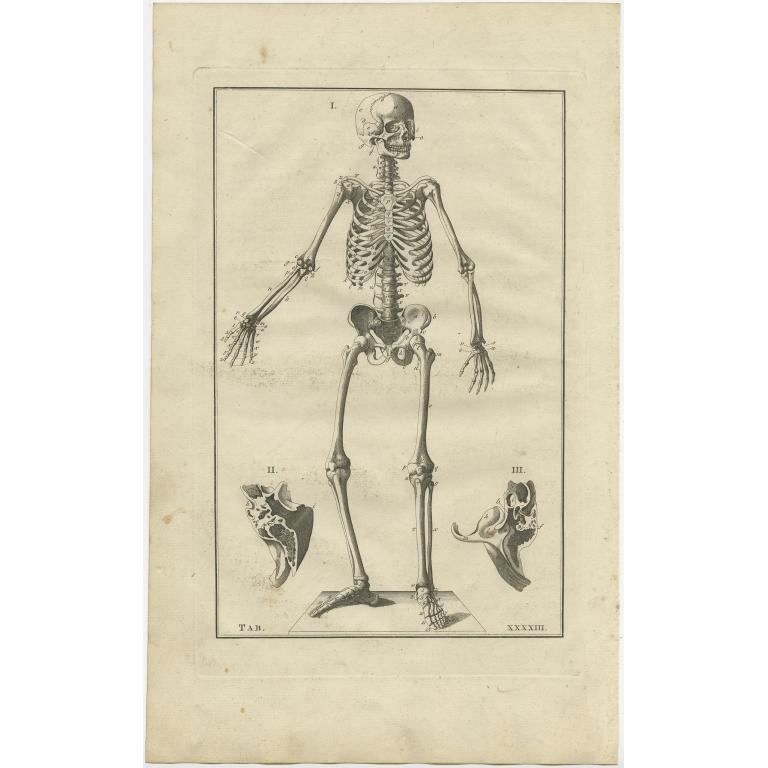 Pl. 43 Antique Anatomy Print of the Human Skeleton by Elwe (1798)
