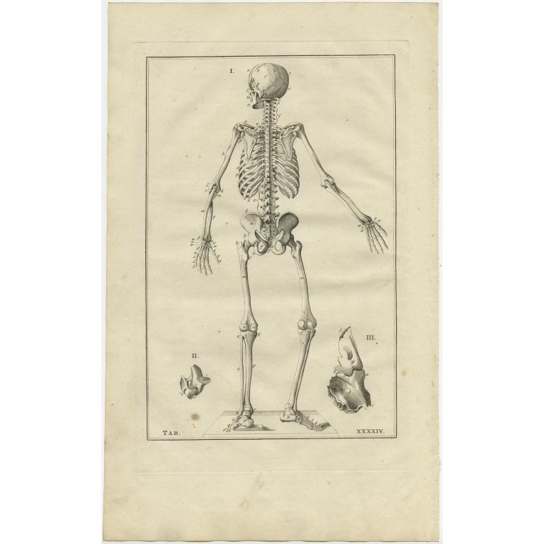 Pl. 44 Antique Anatomy Print of the Human Skeleton by Elwe (1798)