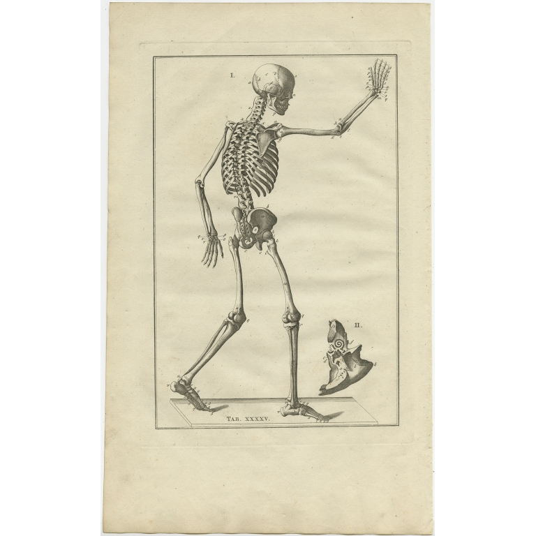 Pl. 45 Antique Anatomy Print of the Human Skeleton by Elwe (1798)