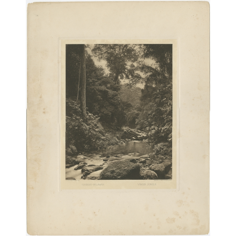 Antique Print of the Jungle and Sungai Belawan river by Kleingrothe (c.1910)