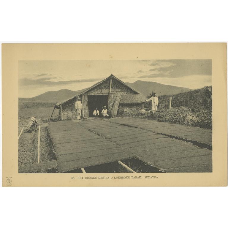 Antique Print of tobacco drying in Payakumbuh (1911)