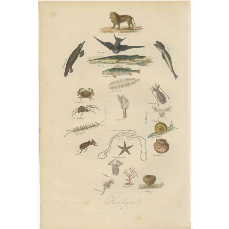 Antique Print of Mammals, Birds and other Animals by Comte (1854)