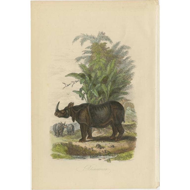 Antique Print of Rhinoceros by Comte (1854)