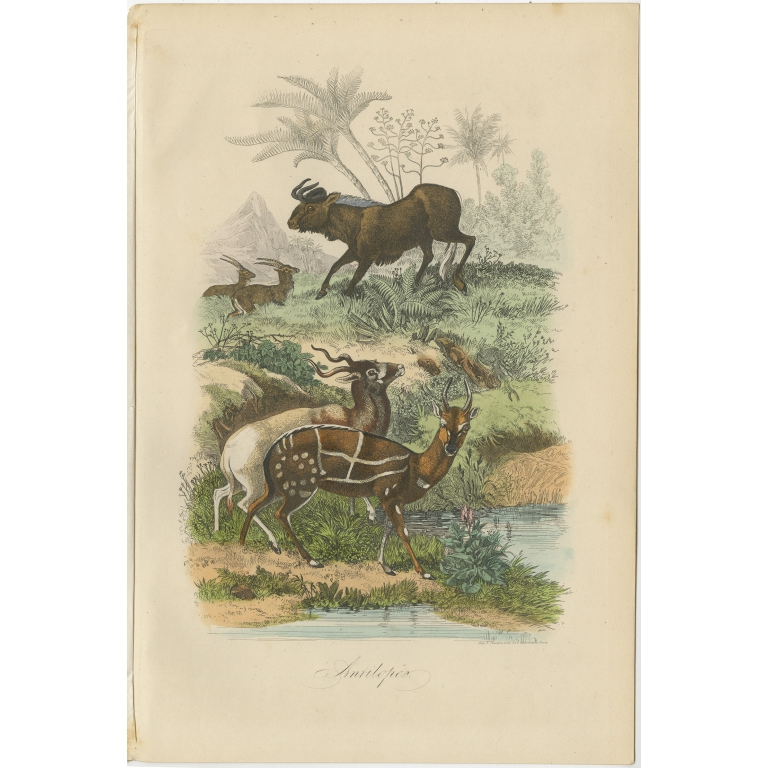 Antique Print of Antelopes by Comte (1854)