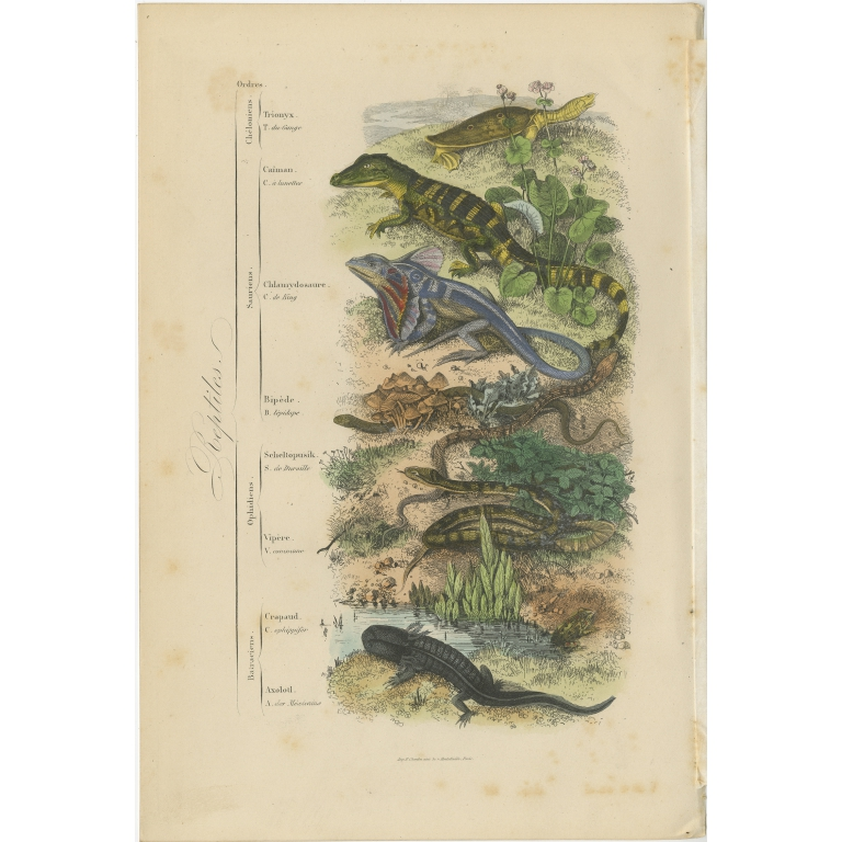 Antique Print of various Reptiles by Comte (1854)