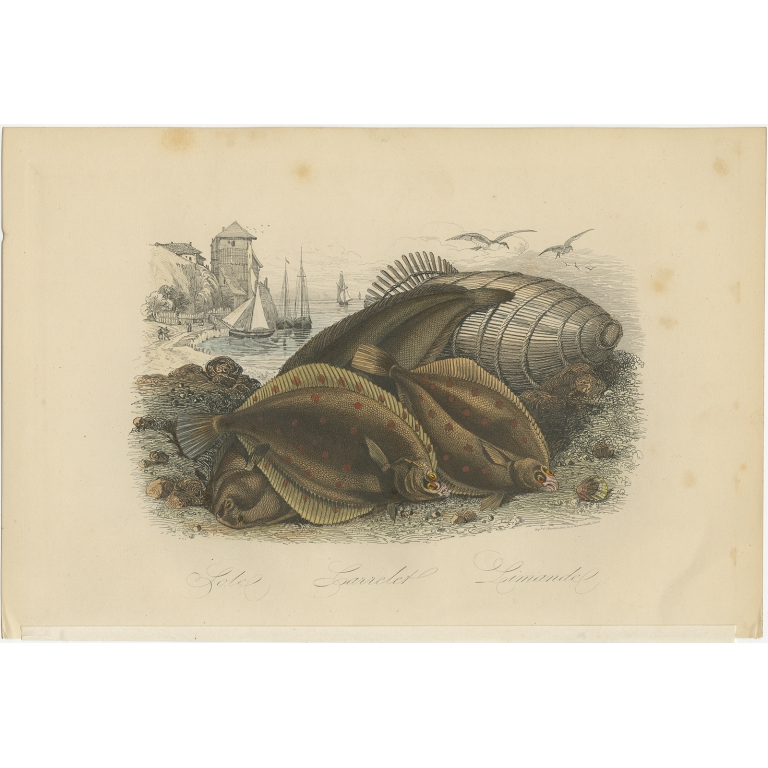 Antique Print of various Flatfish by Comte (1854)