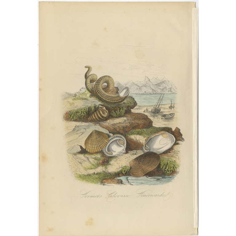 Antique Print of Bivalve Molluscs and other Molluscs by Comte (1854)