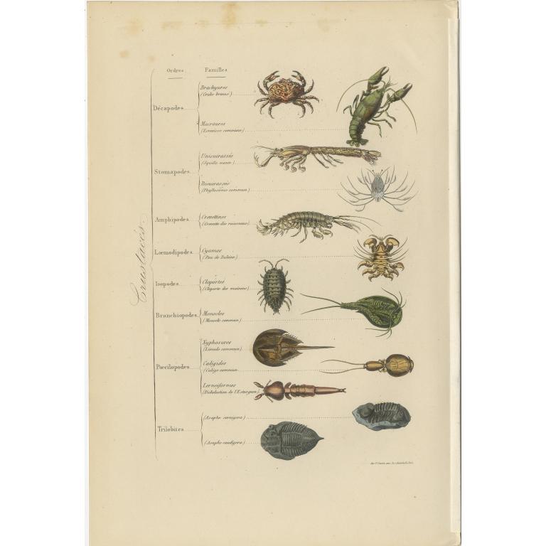 Antique Print of various Annelids by Comte (1854)