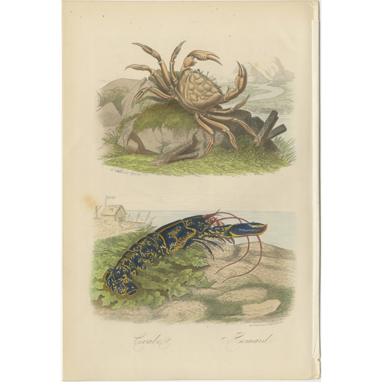 Antique Print of a Crab and Lobster by Comte (1854)