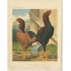 Antique Print of Malay Chicken by Cassell (c.1880)