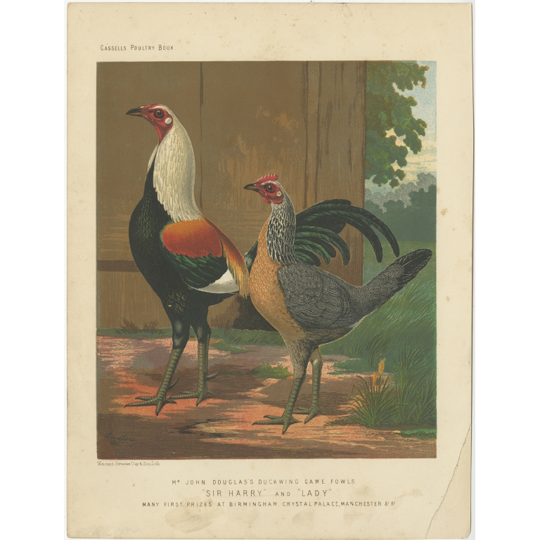 Antique Print of Duckwing Chicken by Cassell (c.1880)