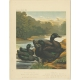 Antique Print of East Indie and Cayuga Ducks by Cassell (c.1880)