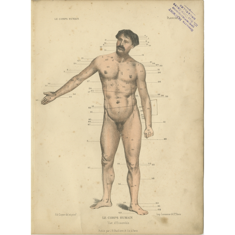 Antique Print of the Human Body by Kuhff (1879)