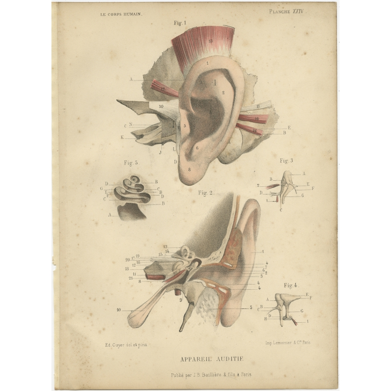Antique Print of the Human Ear by Kuhff (1879)