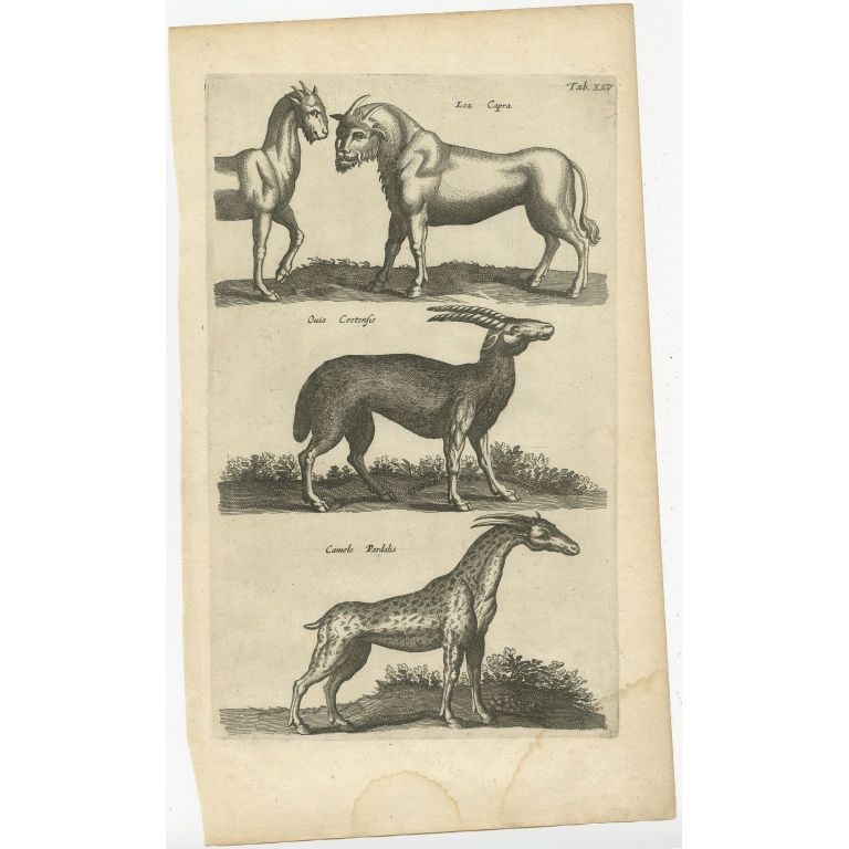 Pl. 45 Antique Print of various Animals by Merian (1657)