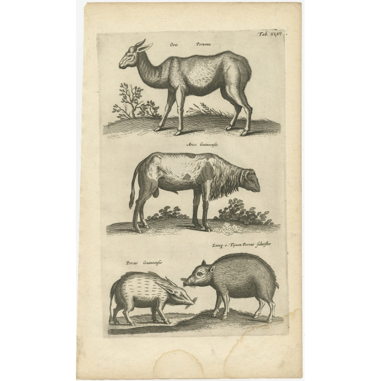 Pl. 46 Antique Print of various Animals by Merian (1657)