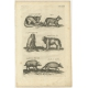 Pl. 74 Antique Print of various Animals by Merian (1657)