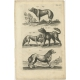 Pl. 56 Antique Print of various Animals by Merian (1657)
