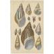 Pl. 60 Antique Print of various Sea Shells by Fullarton (c.1852)