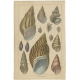 Pl. 60 Antique Print of various Sea Shells by Fullarton (c.1852)