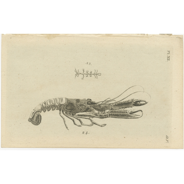 Pl. 12 Antique Print of a Lobster by Pennant (1777)