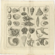 Pl. 5 Antique Print of Sea Snails and Seashells by Martinet (1808)