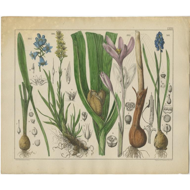 Pl. 76 Antique Botany Print of various Plants by Oudemans (c.1872)