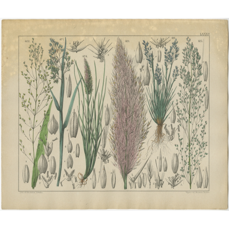 Pl. 82 Antique Botany Print of various Plants by Oudemans (c.1872)