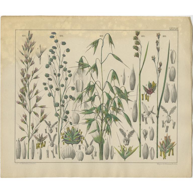 Pl. 83 Antique Botany Print of various Plants by Oudemans (c.1872)
