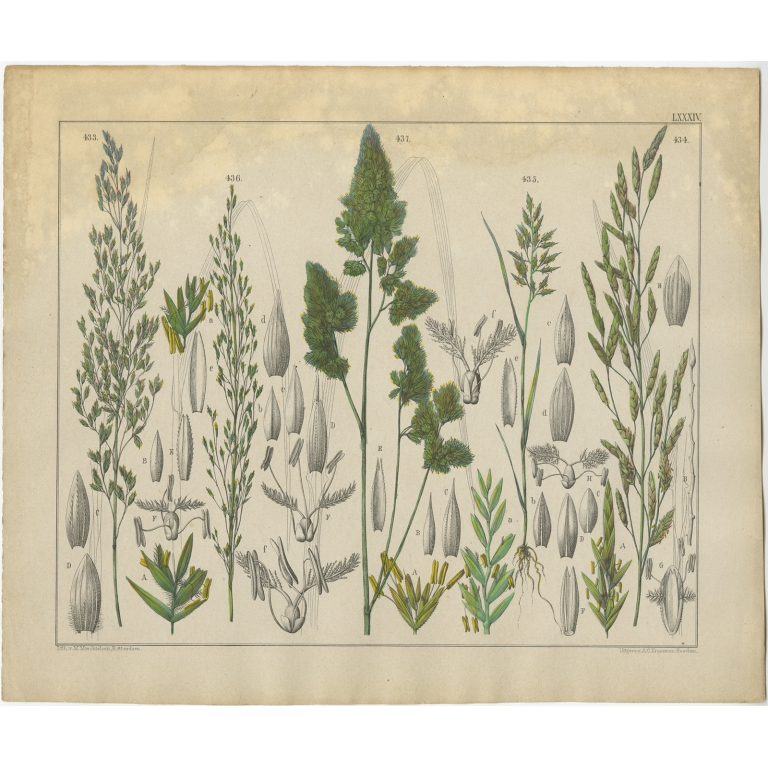 Pl. 84 Antique Botany Print of various Plants by Oudemans (c.1872)