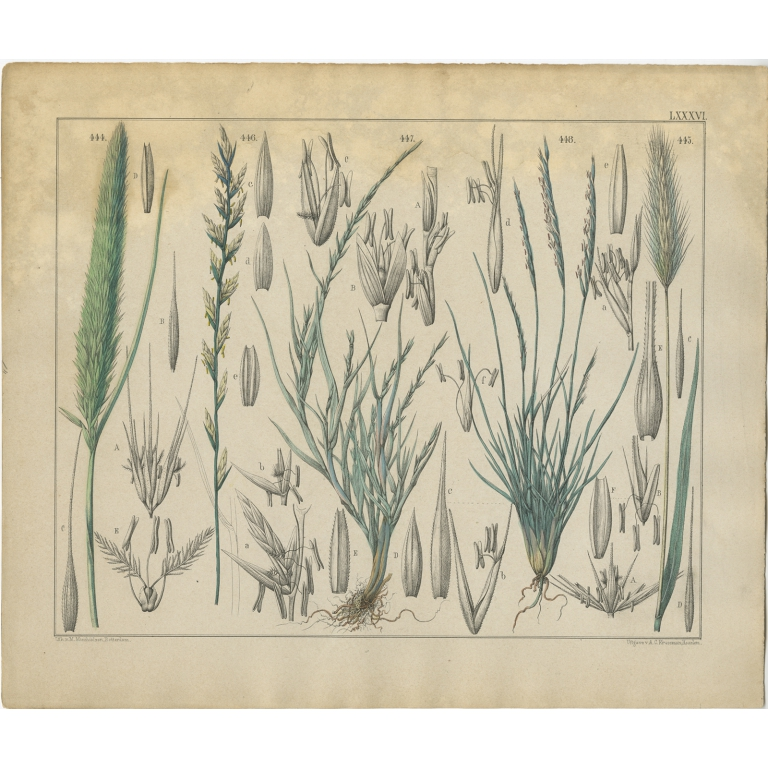 Pl. 86 Antique Botany Print of various Plants by Oudemans (c.1872)