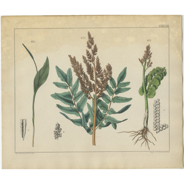 Pl. 88 Antique Botany Print of various Plants by Oudemans (c.1872)
