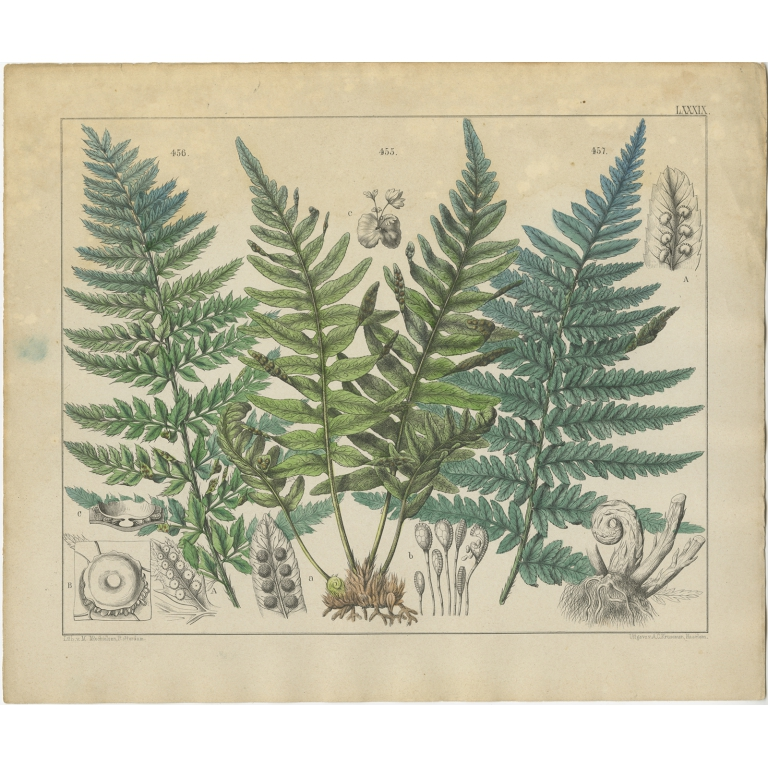 Pl. 89 Antique Botany Print of various Plants by Oudemans (c.1872)