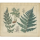 Pl. 90 Antique Botany Print of various Plants by Oudemans (c.1872)