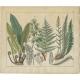 Pl. 91 Antique Botany Print of various Plants by Oudemans (c.1872)
