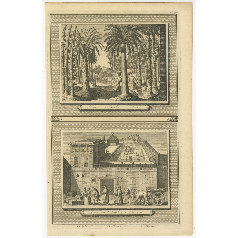 Antique Print of Palm Trees and the Factory in Suratte by Van der Aa (1719)
