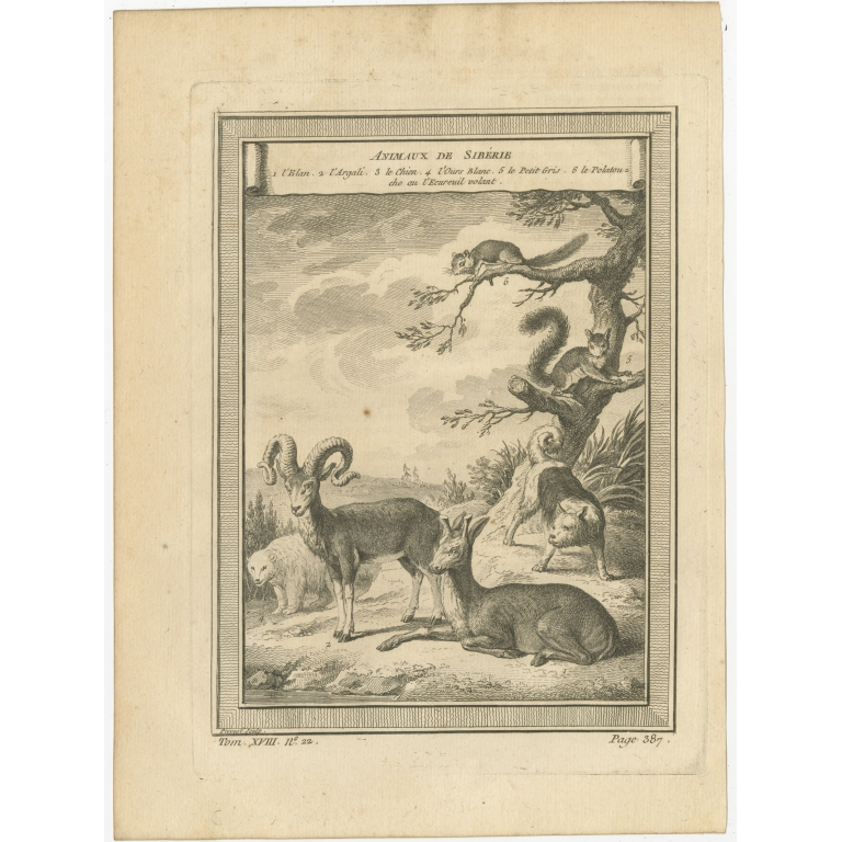 Antique Print of Animals of Siberia by Prévost (1768)
