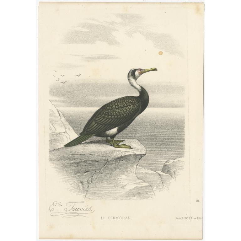 Antique Print of a Cormorant Bird by Traviès (c.1860)