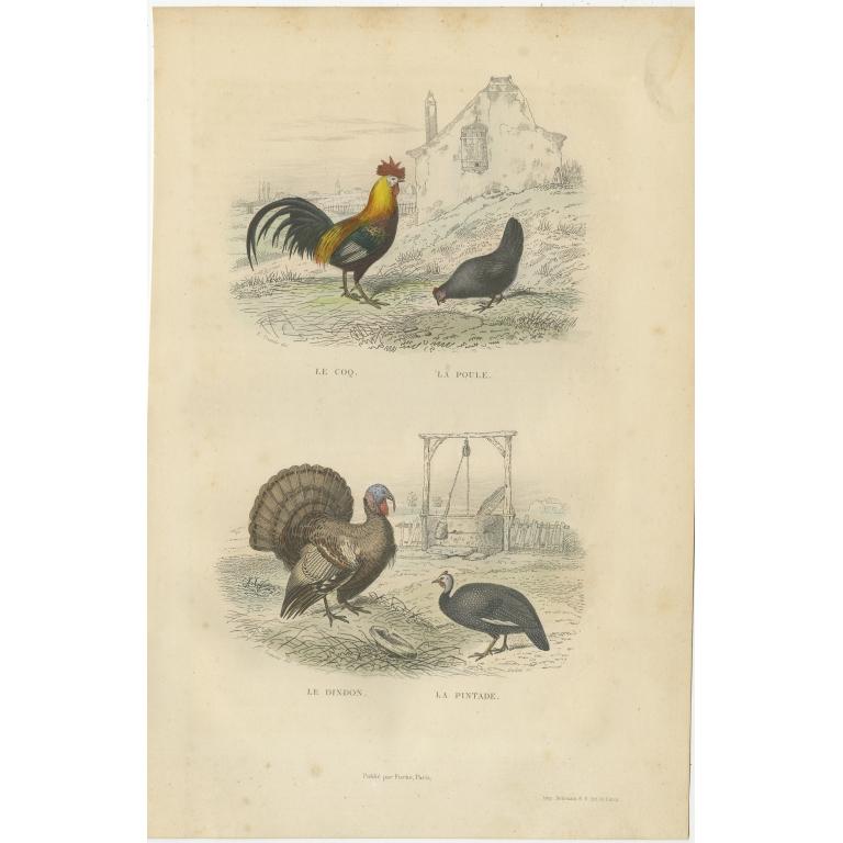 Antique Bird Print of a Rooster, Hen, Turkey & Guinea Fowl by Buffon (1841)