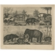 Antique Print of an Elephant, Tapir and other Animals by Winkles (c.1855)