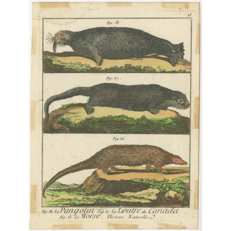 Antique Print of an Anteater, Otter and Walrus by De Félice (1777)