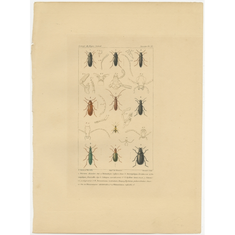 Pl. 33 Antique Print of various Insects by Giraud (1834)