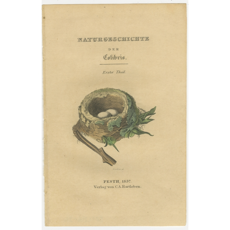 Antique Frontispiece with the Nest and Eggs of Hummingbirds by Jardine (1837)