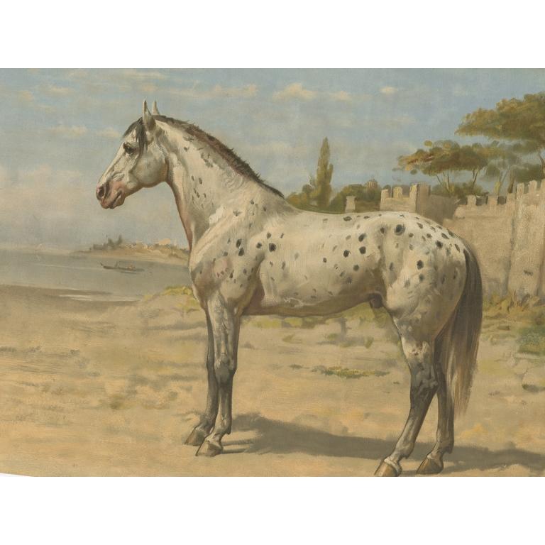 Antique Print of a Turkish Horse by Eerelman (1898)