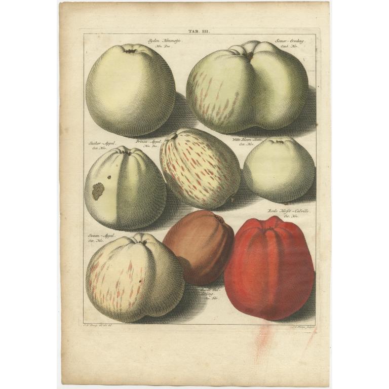 Tab. III Antique Print of various Apples by Knoop (1758)